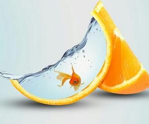 goldfish, oranges, and peel image