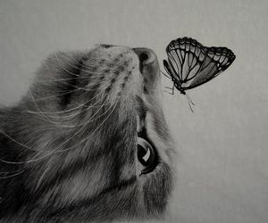 animals, art, and black and white image