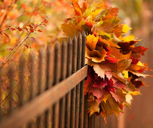 autumn, fence, and i love fall image