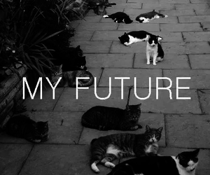cat, future, and my future image
