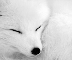 white, cute, and fox image