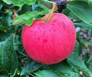 apples, autumn, and desserts image