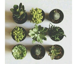 plants, alternative, and green image