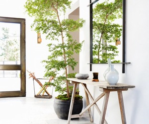 asia, bamboo, and mirrior image