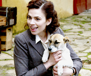 dogs, hayley atwell, and Marvel image