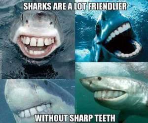 shark, funny, and teeth image