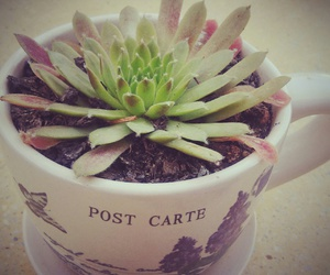 cup, happy, and plant image