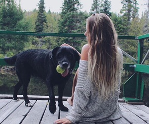 dog, blonde, and hair image