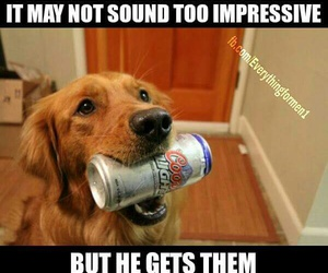 animals, pets, and beer image