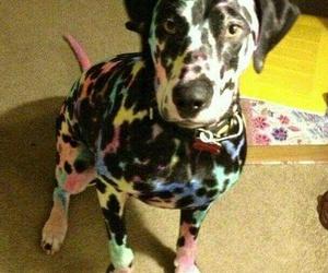 dog, dalmatian, and animal image