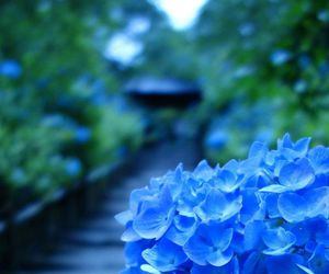 green, japan, and blue image