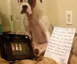 dog, guilty, and funny image