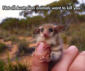 possum image