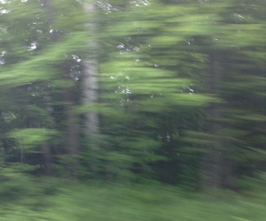 aesthetic, blurry, and forrest image