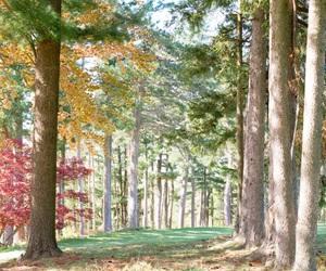 autumn, flowers, and landscape image