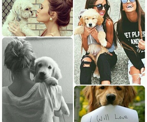 dogs, life, and forever image