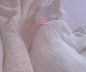 cat, white, and pink image