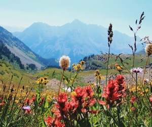 flowers, forest, and hiking image