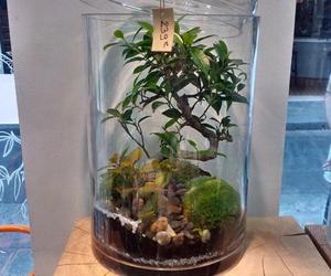 beautiful, bonsai, and class image