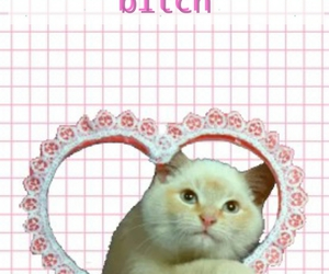 background, cat, and grids image