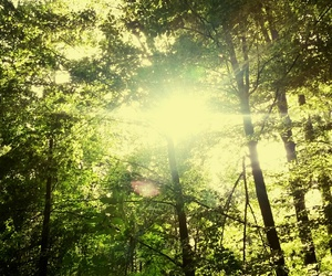 green, wald, and magical image