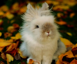 bunny, fall, and leaves image