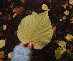 autumn, beautiful, and beauty image