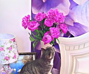 cat, flowers, and beautiful image