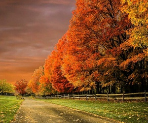 autumn, nature, and road image