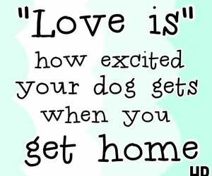 dog, excited, and home image