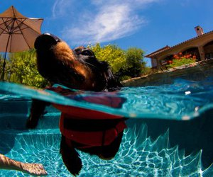 dog, photography, and pool image