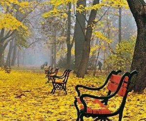 foliage, autumn, and bench image