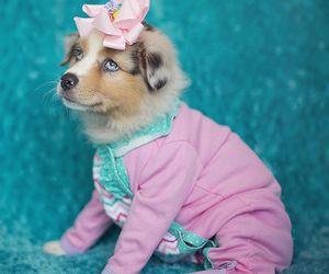 adorable, aww, and baby image