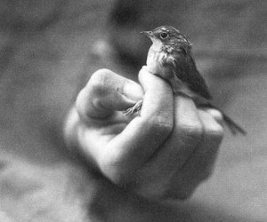 bird, black, and photography image
