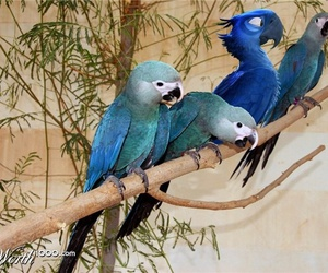 blu, parrot, and rio image