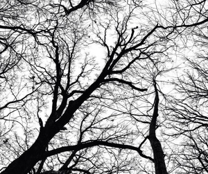 black, black and white, and tree image