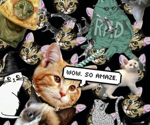 amaze, cat, and wallpapers image