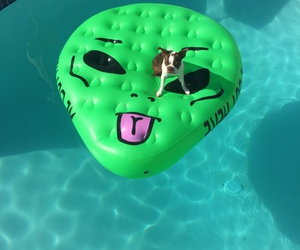 dog, alien, and pool image