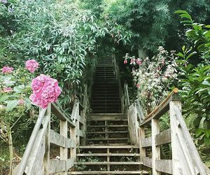 adventure, beautiful, and flowers image