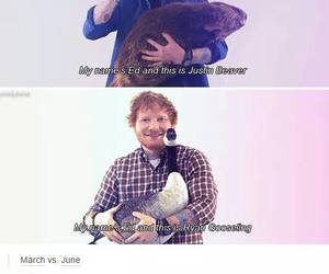 funny, tumblr, and ed sheeran image