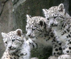 animal, cub, and cuddle image