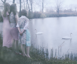 photography and Swan image