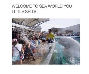 lol, funny, and seaworld image