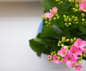 pink flower and kalanchoe image