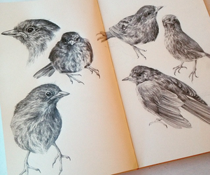bird, art, and draw image
