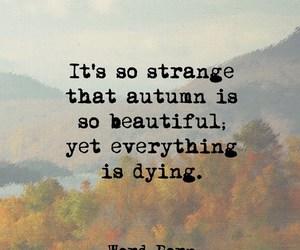 autumn, beautiful, and true image