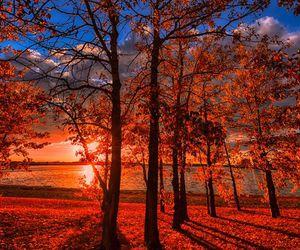 autumn, tree, and sunset image