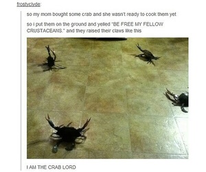 funny, crab, and tumblr image