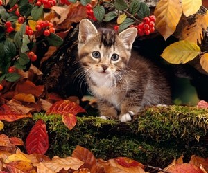 autumn, nice, and picture image
