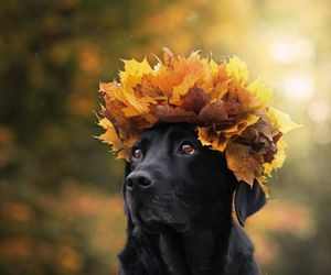 autumn, crown, and leaves image
